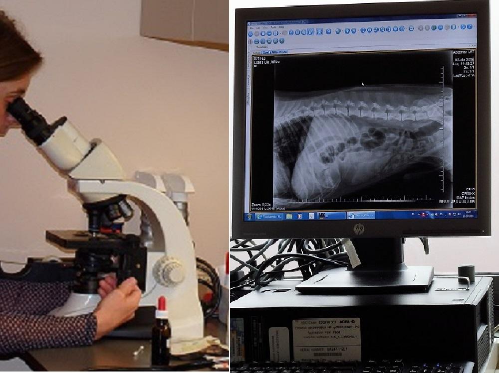 Microscopie, Rx en echografie